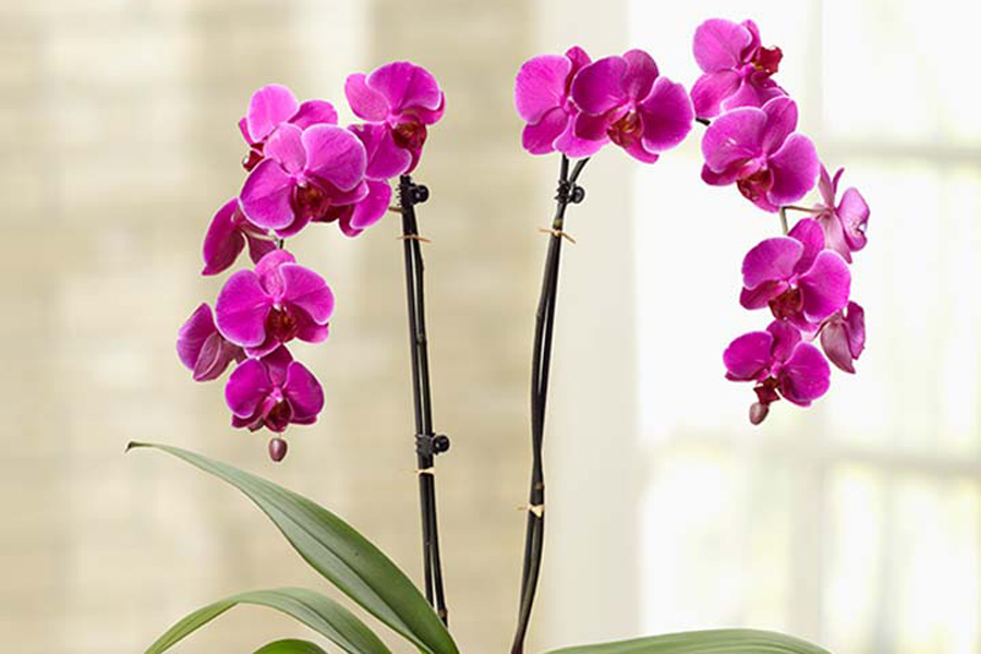 all-about-orchids