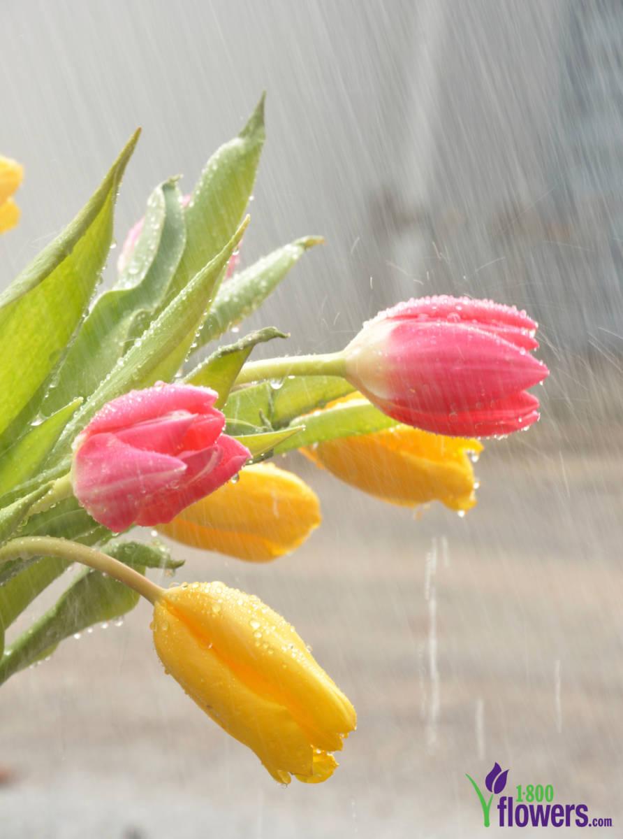 April Showers Bring May Flowers Origin