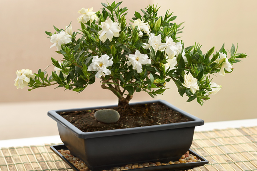 How to feng shui your office space petal talk for 1800 flowers bonsai