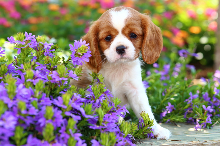 Gardening with your pets- dog and flowers