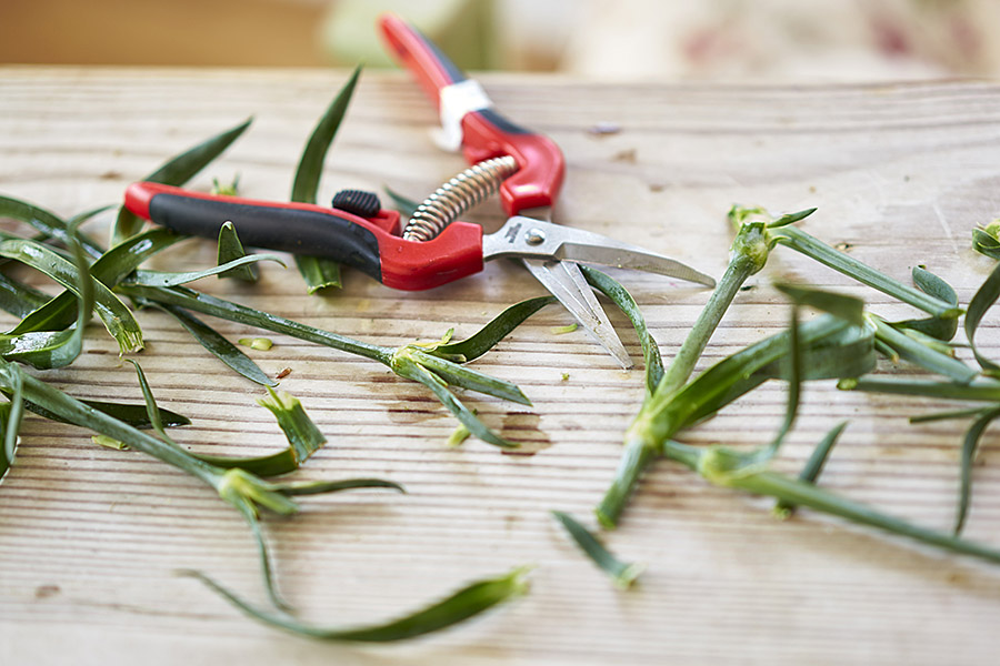 Take Cut Carnation Stems to Make Pumpkin Stem