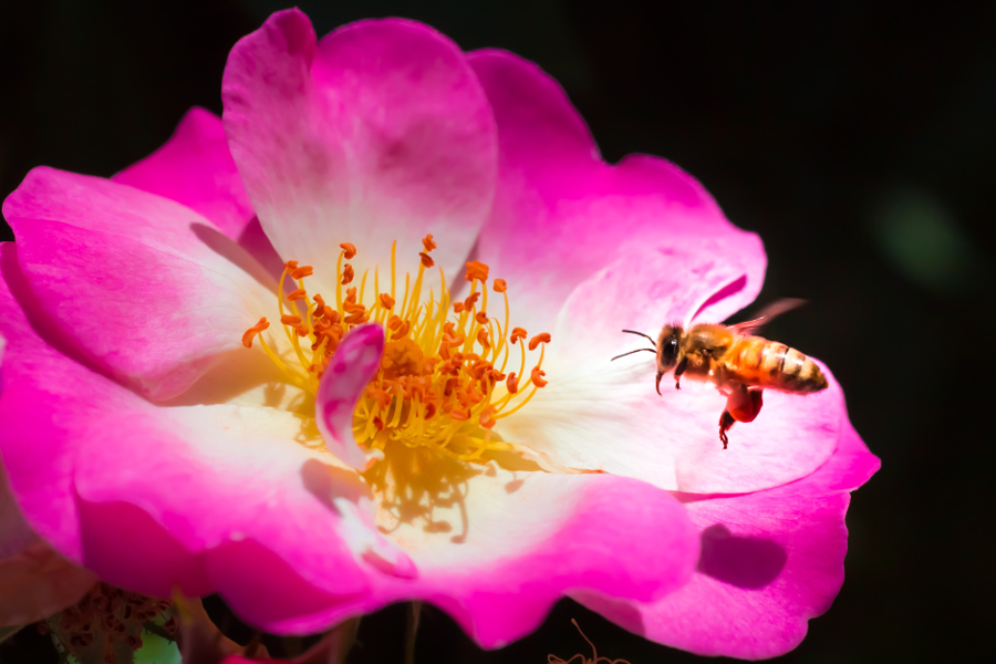 bee-on-flower