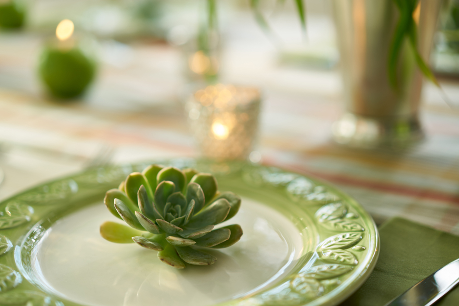 Succulent Plate Decor