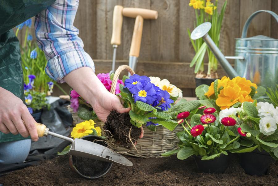 Gardening- Annuals & Perennials
