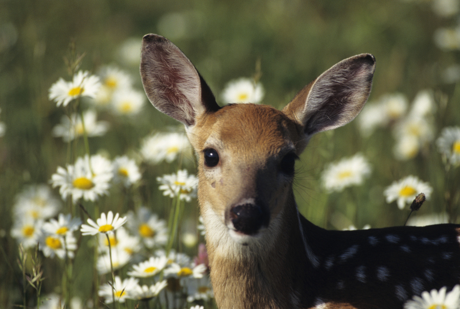 Cute Deer with Flowers