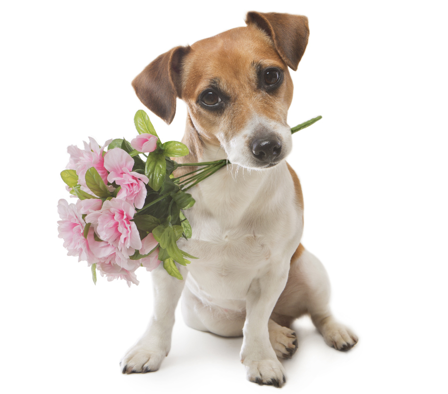 Dog Holding Bouquet of Flowers