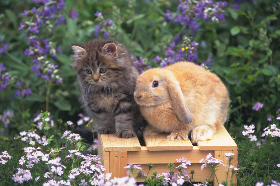 Kitten and Bunny on Box