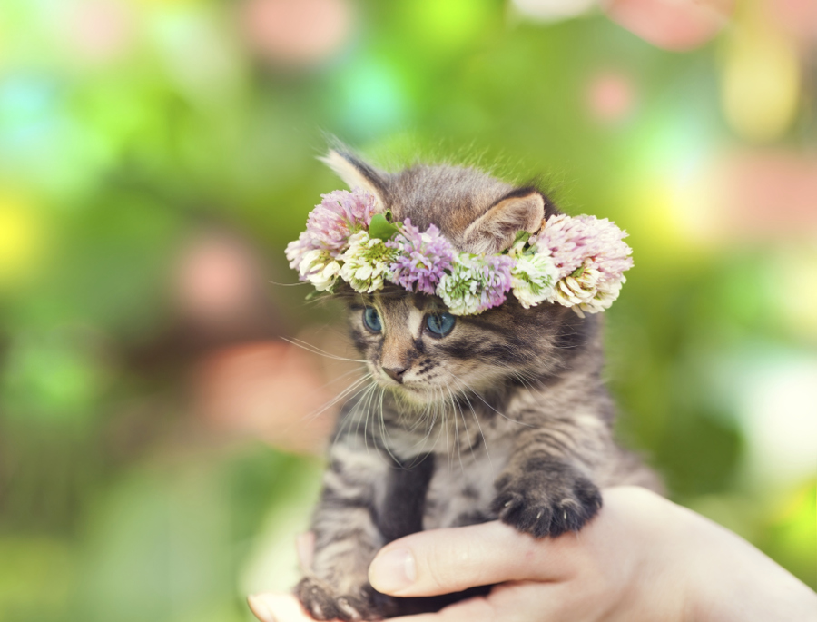 Kitten wearing floral crown