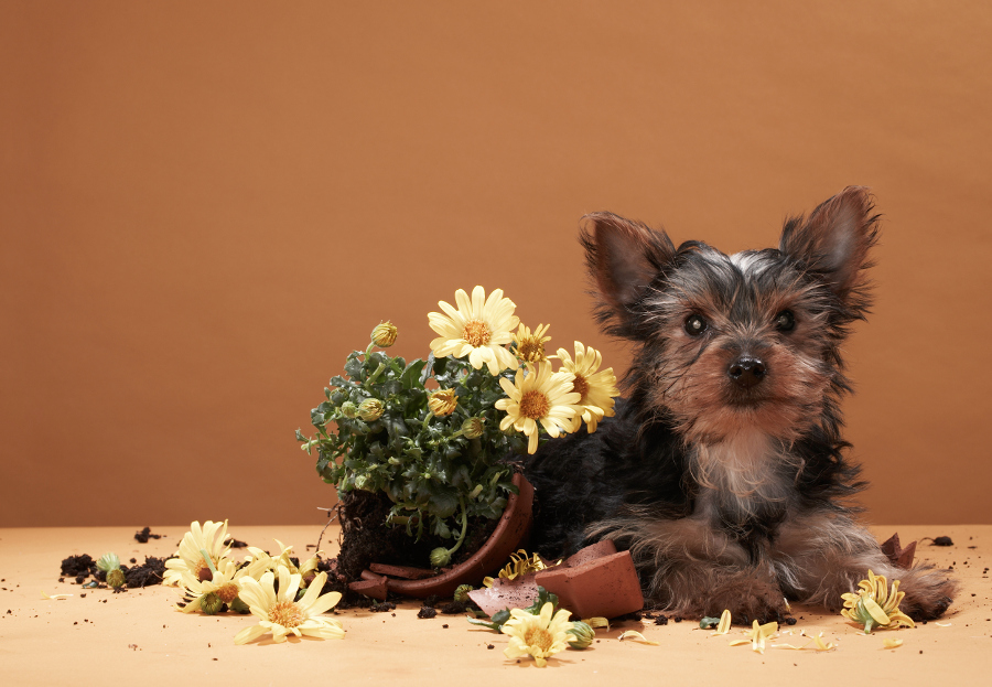 Puppy with broken flower pot