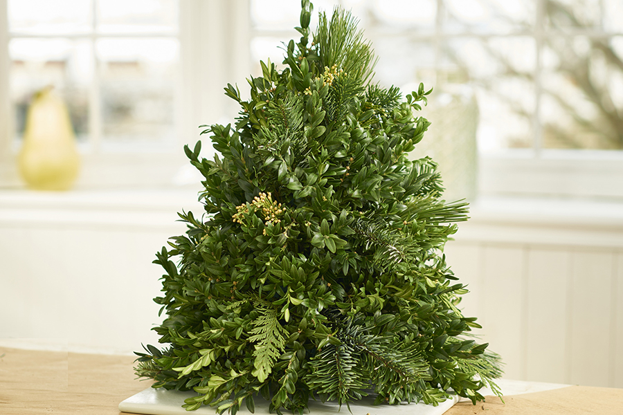 Accent Evergreens
