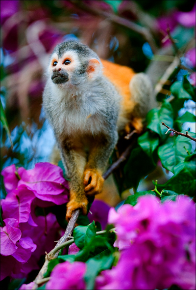 monkey-in-flowers