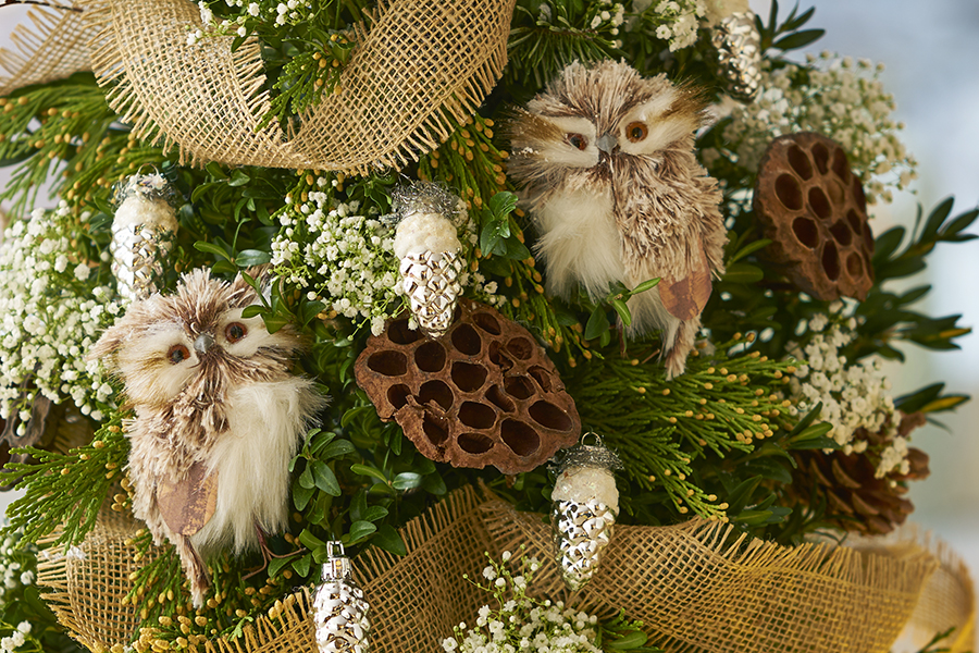 Closeup of owls in tree
