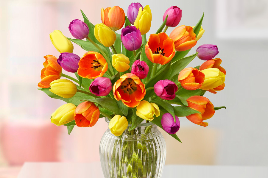 Cut tulips in a vase in assorted colors