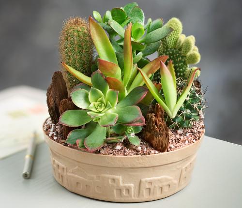 cactus-dish-garden-succulents