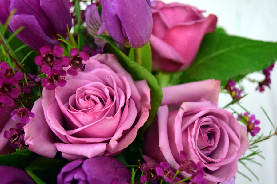 Purple roses and flowers close-up
