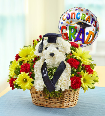 best-in-class-graduation-a-dog-able