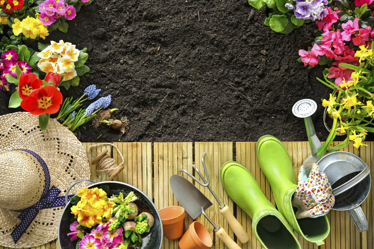 Gardening Tips For Beginners Petal Talk