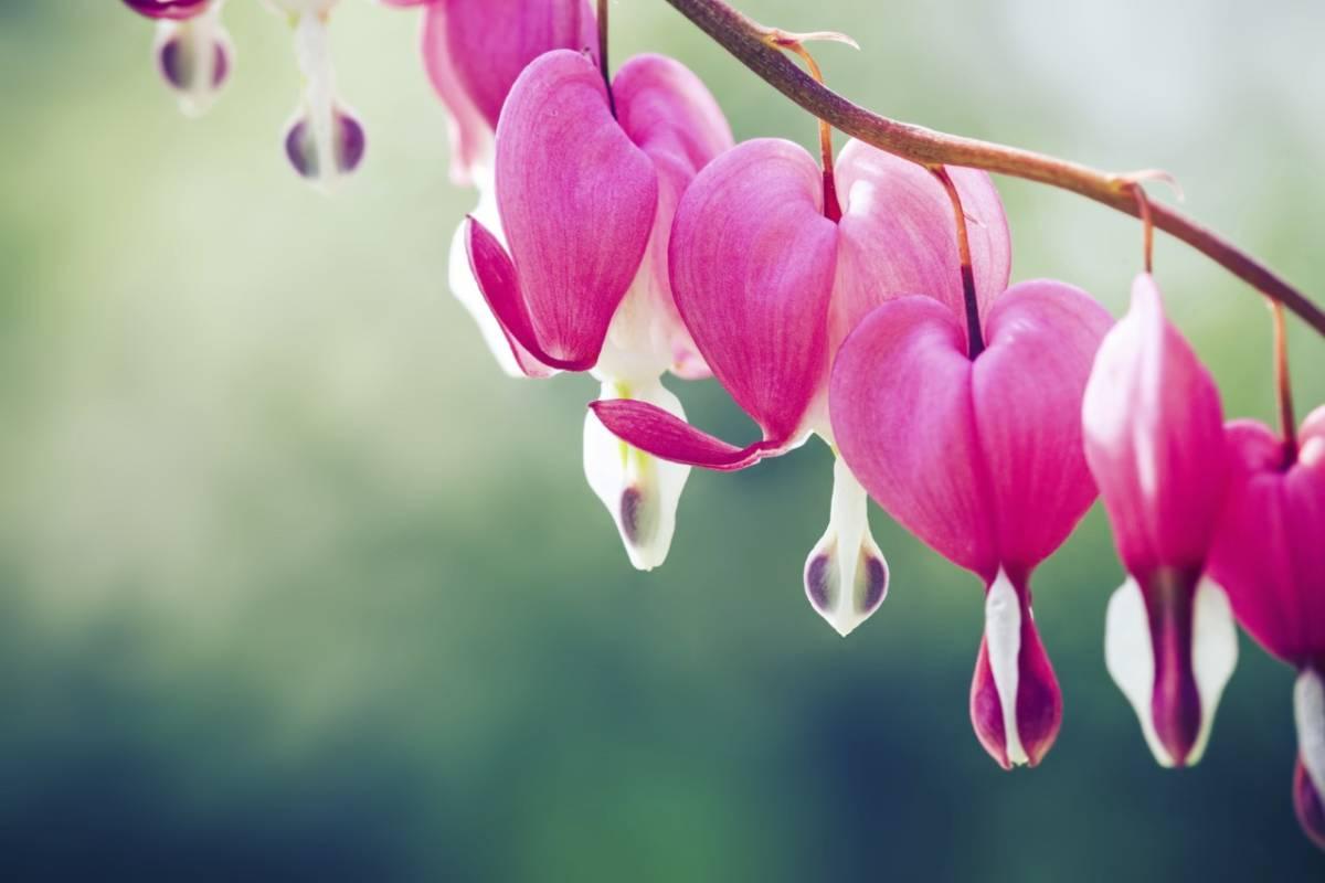 Top 5 Flowers That Grow Best In Shade Petal Talk