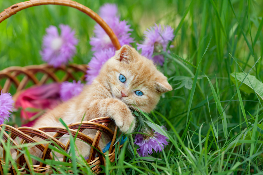 cat-in-basket-with-flowers