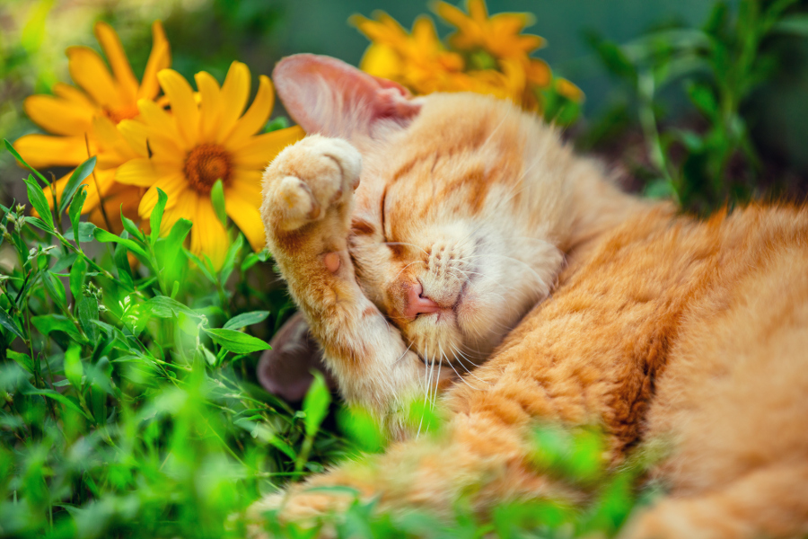 Cute cat sleeping on the grass with flowers