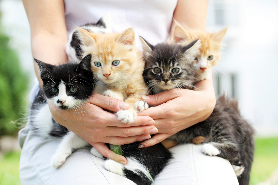 Person holding group of little cats in arms.