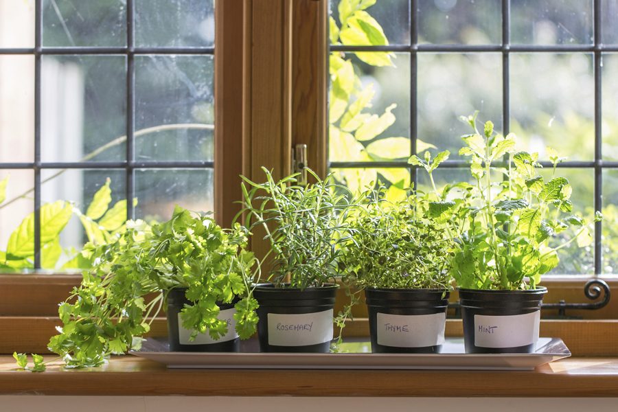herbs-for-an-indoor-herb-garden