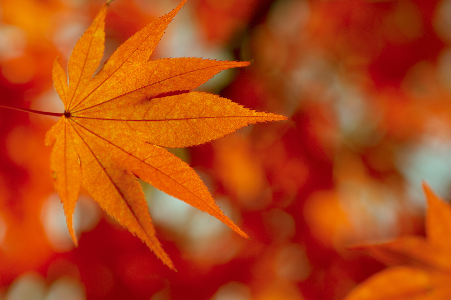 colorful-fall-leaf