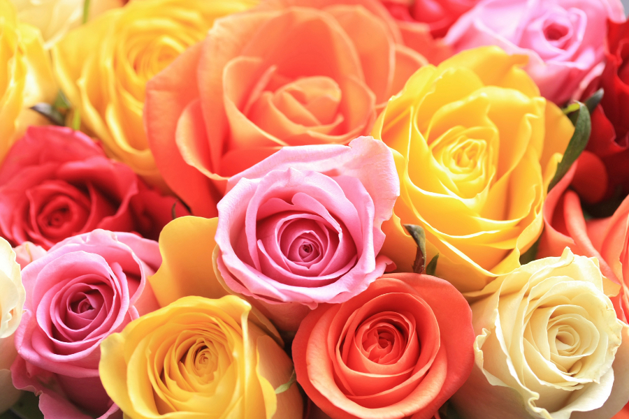 A mixed rose bouquet of different colors