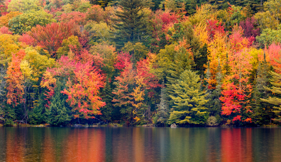 Autumn Foliage Reflecting in a New England Pond Vermont