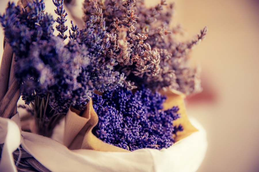 different-types-of-lavender