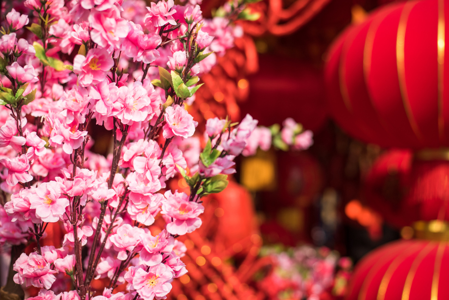 Chinese New Year Flowers- Pink Cherry Blossom Flowers
