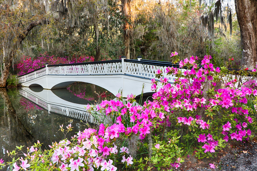 Magnolia Flowers Bridge Charleston