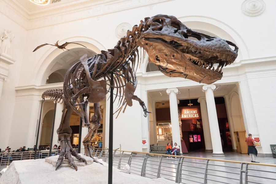 Dinosaur Skeleton at Museum