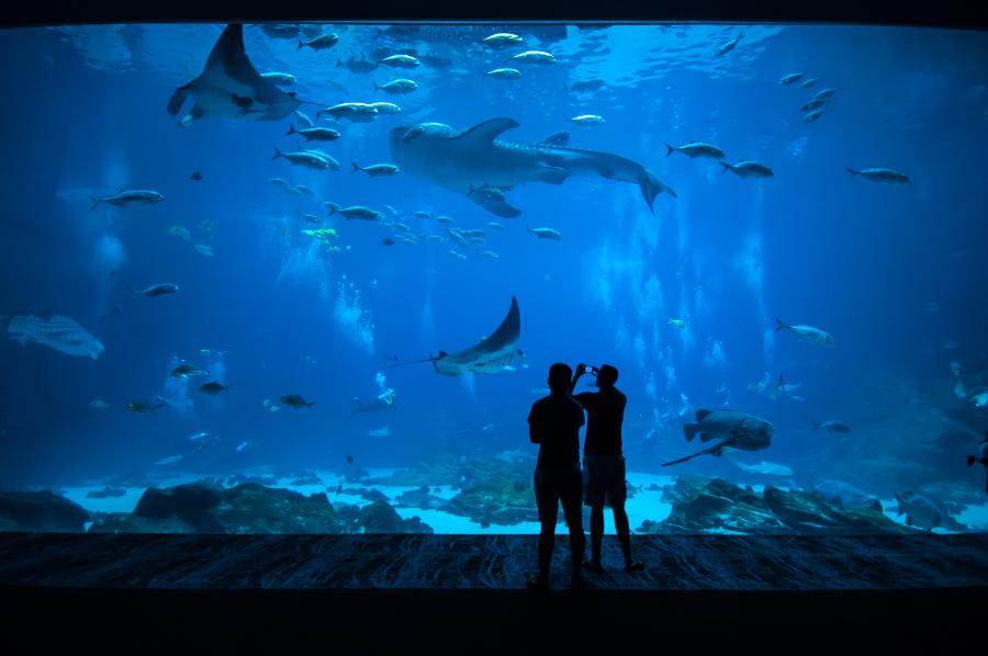 Couple at Aquarium
