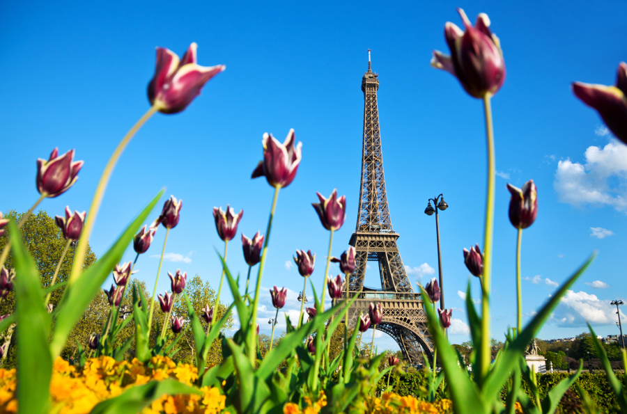 Eiffel Tower Paris Tulips