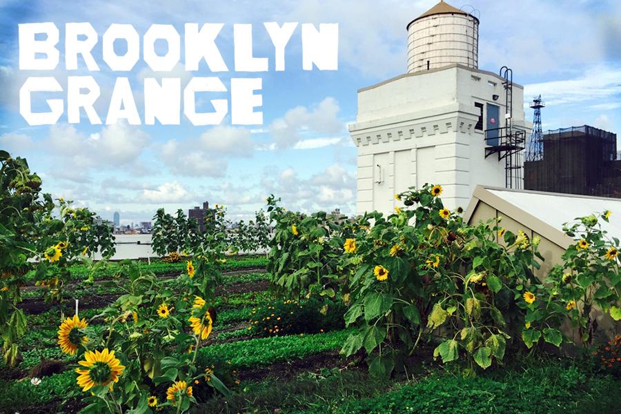 Brooklyn Grange