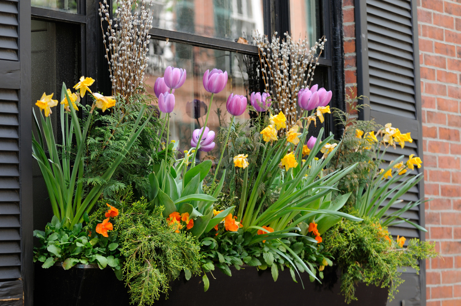 Flower Box on Window Sill