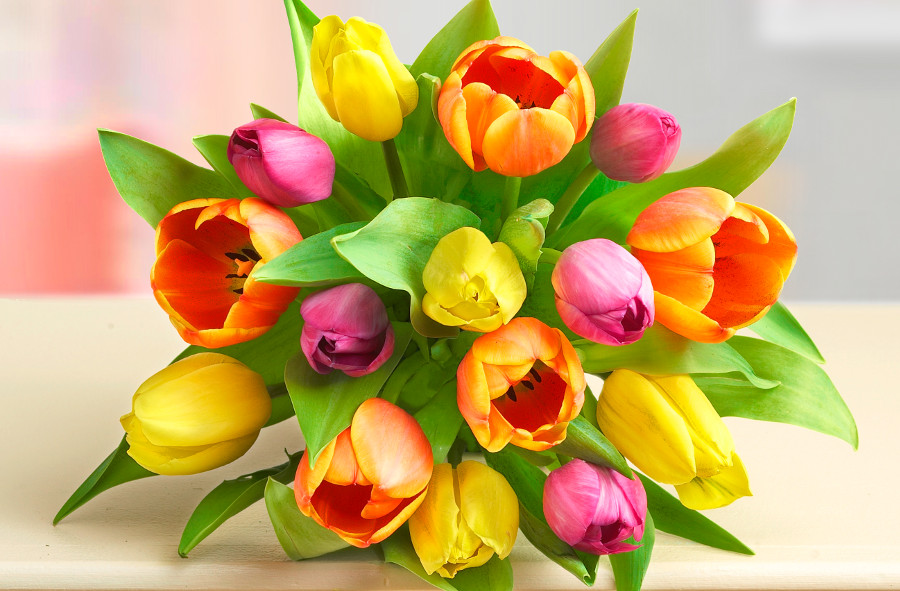 Learn all about each tulip color meaning petal talk and if youre looking to add a bit of luck to your home its believed that planting yellow tulips in your front yard will bring good luck and prosperity mightylinksfo
