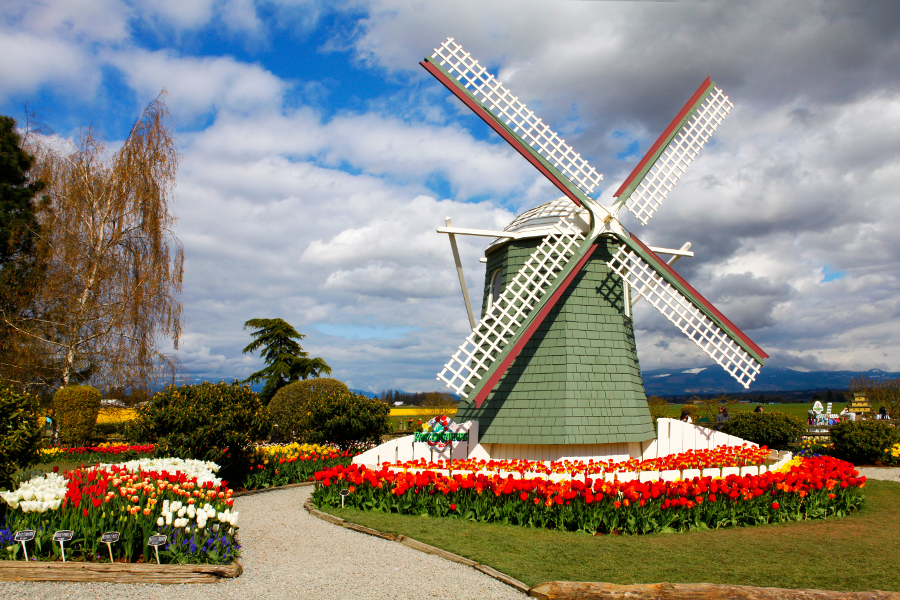 Mount Vernon Washington Tulip Festival