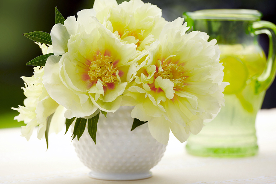 How To Care For Peonies Arrange Them In A Vase Petal Talk
