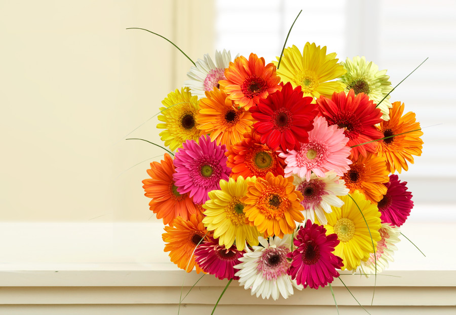 Most Cheerful Flowers To Brighten Someones Day Petal Talk