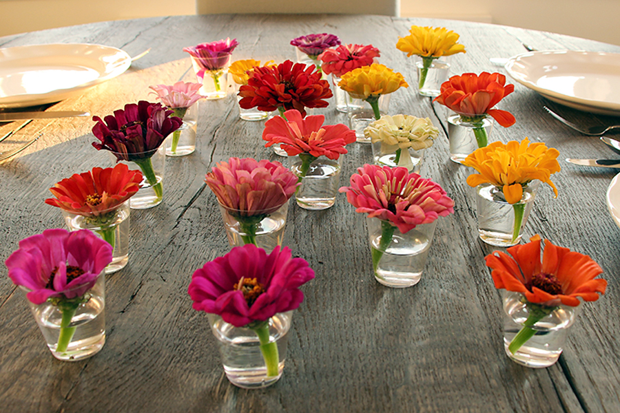 Zinnias in Shot Glasses