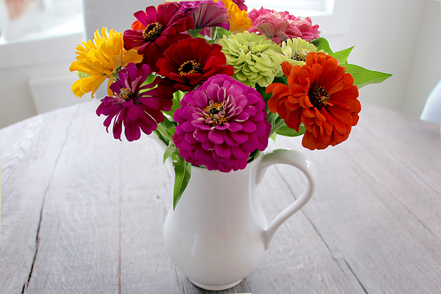Zinnias in a White Pitcher