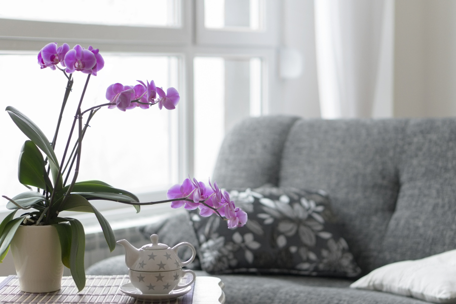 purple orchids placed in empty living room