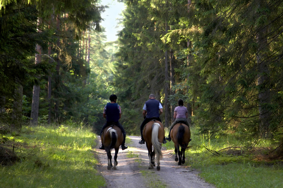 people riding horses on trail in the woods
