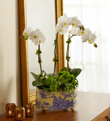 White Orchid Plant on Vanity