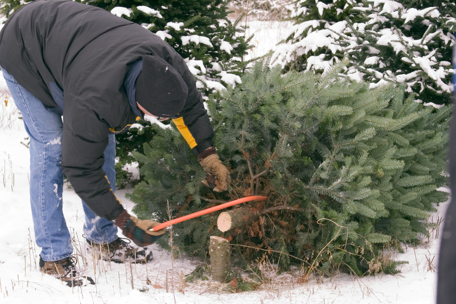 chopping-down-christmas-tree