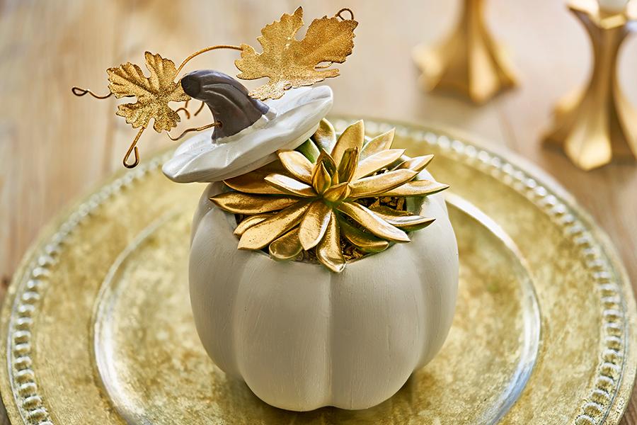 Gold Succulent in White Pumpkin
