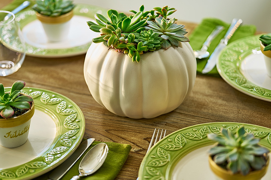 Succulent Centerpiece in White Pumpkin and Mini Pots