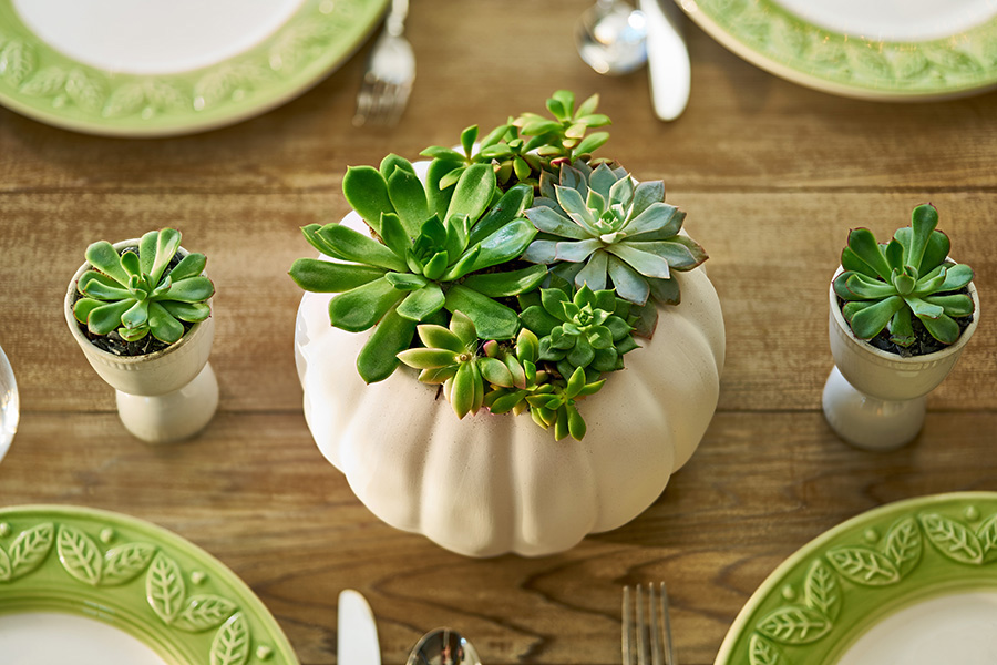 Succulent Centerpiece in White Pumpkin